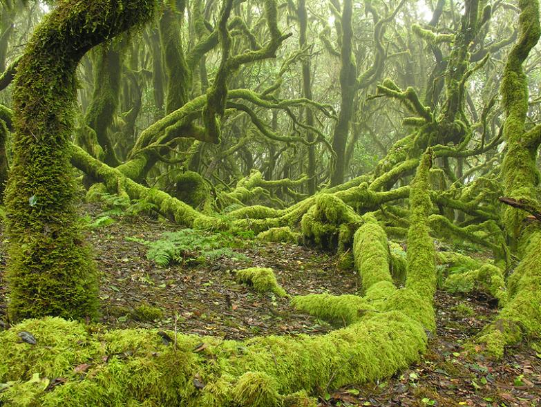 Imagen de Bosque primitivo interpretación de Brokilón